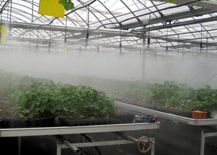 Greenhouse Glazing Systems : Irrigation system commercial greenhouses plastic