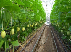 Best automated irrigation system-Jianchuan Greenhouse