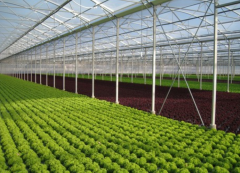 Expert Advice on Vegetable Greenhouse-Bozong Greenhouse