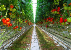 High Quality Vegetable PC Greenhouse-Bozong Greenhouse