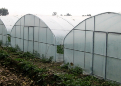 High Tunnel Greenhouse For Sale-Jianchuan Greenhouse