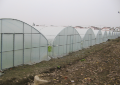 high tunnel greenhouse for vegetable-Jianchuan Greenhouse