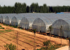 Hot Sale Tunnel Film Greenhouse-Jianchuan Greenhouse