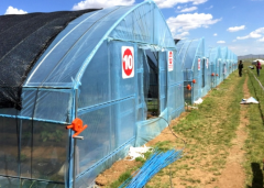 Best Selling Tunnel|Polytunnel Greenhouse-Jianchuan
