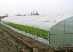 High Polytunnel Greenhouse-Jianchuan Greenhouse