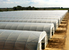Cheap High Tunnel Greenhouse|Polytunnel Greenhouse-Jianchuan