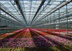 Hot Sale Plexiglass Greenhouse-Bozong Greenhouse