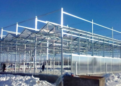 commercial glass for greenhouse-Bozong Greenhouse