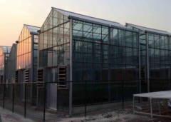 Commercial Glass Greenhouse-Bozong Greenhouse