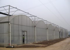 Best Multi Span Film Greenhouse-Bozong Greenhouse