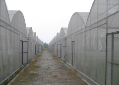 Multi-Span Film Greenhouse For Sale-Jianchuan Greenhouse