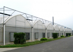 The Best Multi-Span Film Greenhouse For Vegetable-Jianchuan