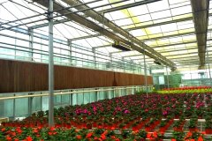 Flower Multi-span Greenhouse With Cooling System-Jianchuan