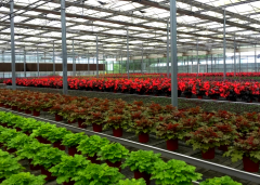 Best Price On Flower Tunnel Greenhouse-Jianchuan Greenhouse