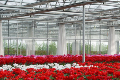 The Importance Of Greenhouse Flower Production-Jianchuan