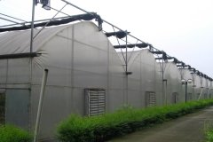 Agricultural Multi-Span Film Greenhouse-Jianchuan