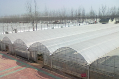 35 years on Mutil-Span Film Greenhouse-Jianchuan Greenhouse