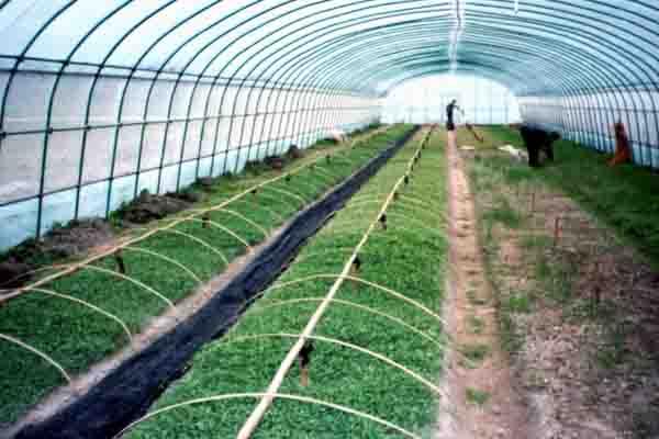 Single Span Film Greenhouse