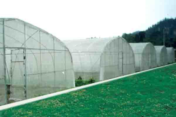 Single Span Film Greenhouse For Vegetable
