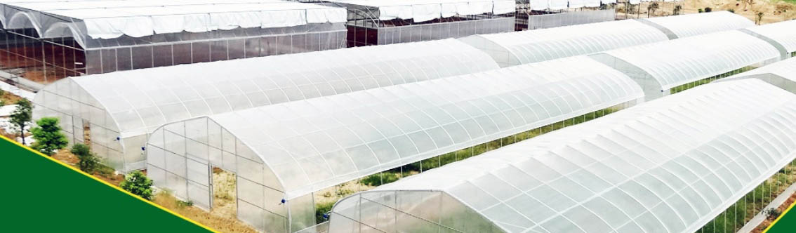 Plastic Film Greenhouse For Vegetable Growing