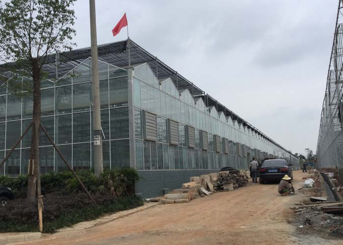 Commercial Multispan Glass Greenhouse