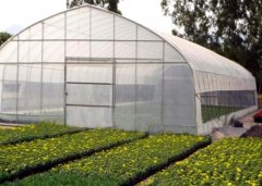 35years Bozong Greenhouse|Vegetable Greenhouse|Film Greenhou