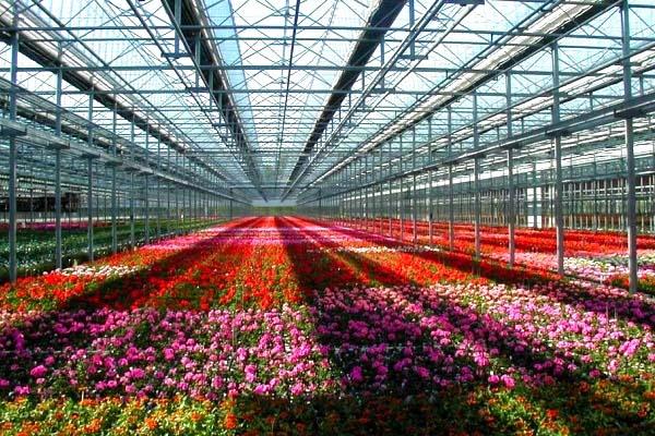 flower glass greenhouse