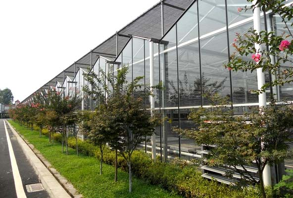 flowers glass greenhouse for sale