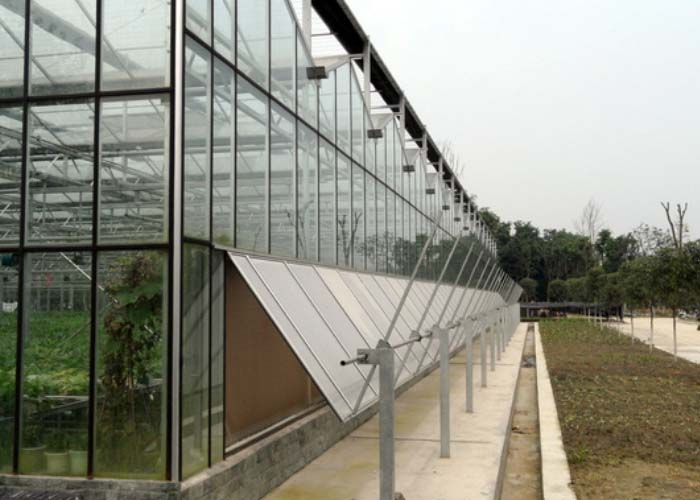 Multi Span Glass Greenhouse