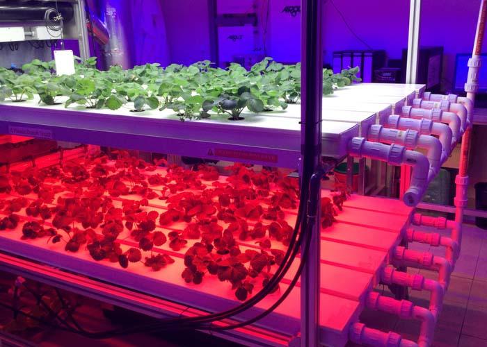 LED Grow Llighting
