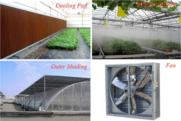 Plastic Film Sawtooth Greenhouse For Equipment