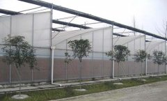 Sawtooth Greenhouse For Greenhouse-Jianchuan Greenhouse