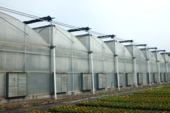 Sawtooth Type Commercial Greenhouse for Sale