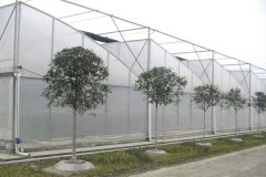 Plastic Film Agriculture Sawtooth Greenhouse From Chinese Fa