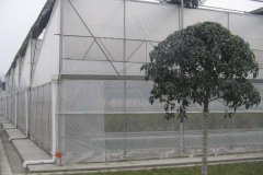 Film Covered Sawtooth Greenhouse for Hot Sale—Jianchuan
