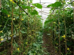 Vegetable Greenhouse For Sale-Bozong Greenhouse